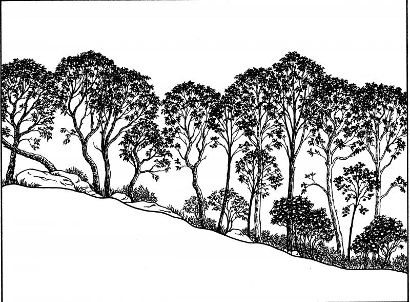Chestnut oak forest